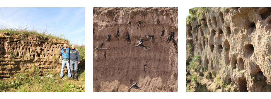 Artificial Sand Martin Bank
